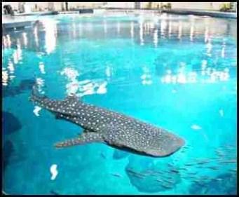 Georgia Aquarium pool