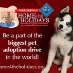Losing in Aurora,  pit bull advocates set their dogs on us,  Blue Buffalo,  & Home 4 the Holidays