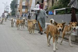 (Help Animals India photo)