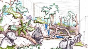 Interior of planned new Cincinnati Zoo gorilla pavilion.