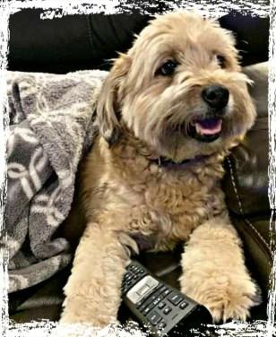 Hansman family dog