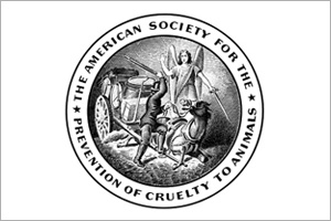 The emblem of the American SPCA shows an angel intervening on behalf of a beaten horse.