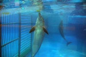 Another view of the dolphin exhibit at the Beijing Zoo. Photo by Sasha Abdolmajid, relayed by Ric O'Barry.