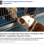 American Pit Bull Examiner flunks examination