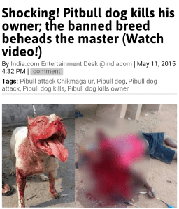 India pit bull attack