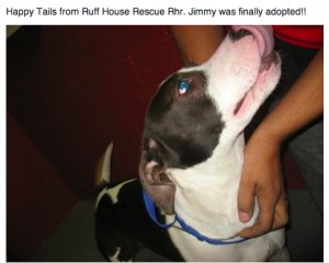"Described on a Facebook page as a ""pointer/pittie mix,""  this dog appears to resemble the Jimmy in question,   but the posting apparently predates plaintiff Fowler's adoption by five months."