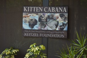 For visitors who must handle a cat, Big Cat Rescue offers cats from local shelters for adoption. (Beth Clifton photo)