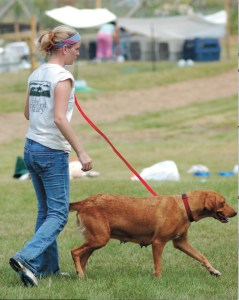 Volunteer walks dogs at the Humane Society of Louisiana rescue center near Tylertown,  Mississippi on September 21,  2005.  (M.C.)