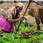 Kenya crisis shows need to transition out of animal agriculture