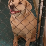 Pound dog inventory down, no-kill inventory up,  in 2015 shelter survey