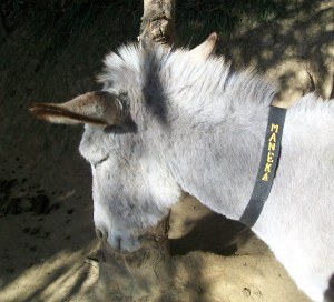 "Said People for Animals founder Maneka Gandhi of her namesake donkey,  ""She is a lot prettier than I am!"""