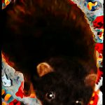 Mink the missing link? COVID-19 deaths & new data suggest yes.