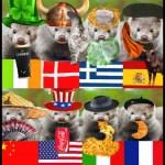 Minks from around the world