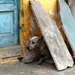 Bangalore to pay dog bite victims $31.50 per puncture