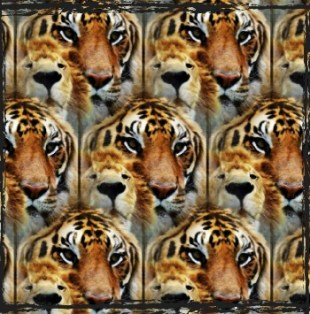 Multiple tigers and lions collage