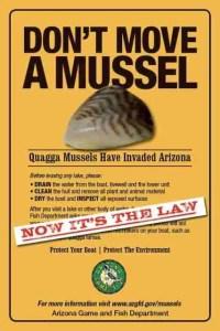 Mussel_law