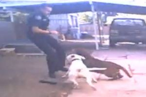 December 2013 incident. (Nampa Police Department image)