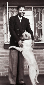 Nelson Mandela saying goodbye to his Rhodesian ridgeback on April 20, 1964, moments before being taken to prison. Photographer Alf Kumalo, 1930-2012, himself a hero of the anti-apartheid struggle, was probably the greatest news photographer South Africa has ever had.