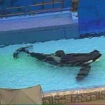 About Tilikum:  an open letter to Sea World