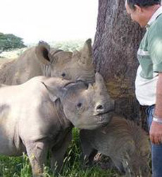 Johnny Rodrigues with orphaned rhinos.  (Zimbabwe Conservation Task Force photo)