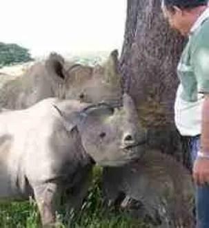 Johnny Rodrigues with orphaned rhinos. (Zimbabwe Conservation Task Force photo)