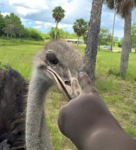 Noah,  age 3,  instructs ostrich against sticking her head in the sand.  (Greg Robbins photo)