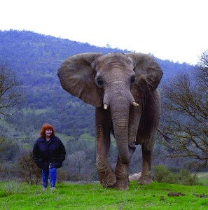 Pat Derby & 71, one of the elephants at the Performing Animal Welfare Society's Ark 2000 sanctuary.