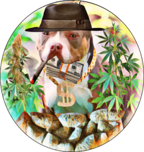 Pit bull surrounded by marijuana