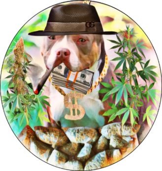 Pit bull surrounded by marijuana