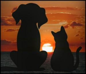 Cat, dog, sunset