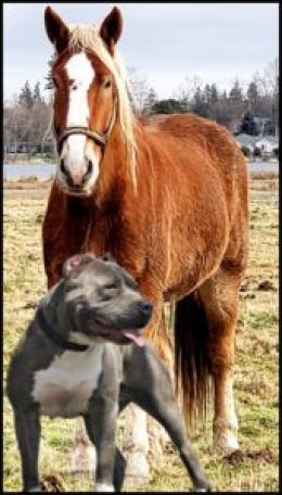 Horse & pit bull by Beth Clifton