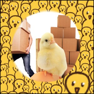 Chicks & boxes