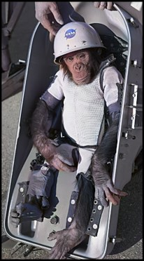 Ham the chimpanzee in January 1961, before his flight into space