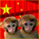 China cloning advance to cut monkey use in research, say scientists
