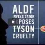 Undercover videos push Tyson into requiring farm animal welfare audits