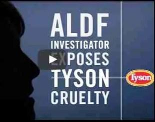 ALDF vs. Tyson