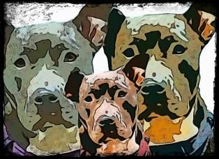 Three pit bull collage