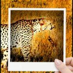 Trial of Iranian cheetah defenders facing death penalty begins