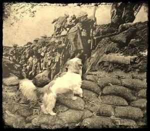 Teddy the war dog