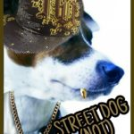 Street dogs in the U.S.?  Nathan Winograd has gone barking mad.