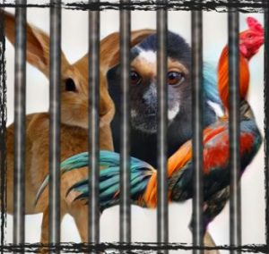 Rooster. Marmoset, rabbit in a cage