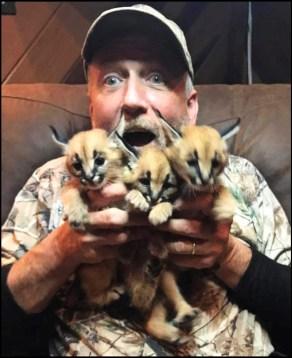 Tim Stark & baby caracals.