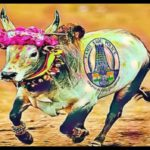 Indian-style bullfights resume at urging of prime minister Nahrendra Modi