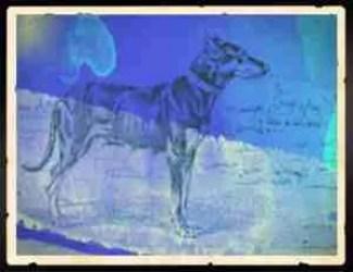 "Houston dog fancier killed: ""Before pit bulls, it was"