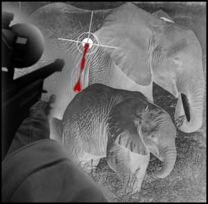 Hunter shooting elephant