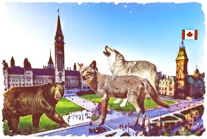 Ottawa wildlife