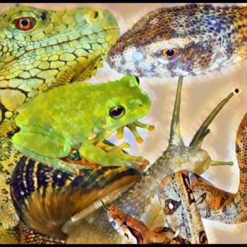 Invasive animals in Florida