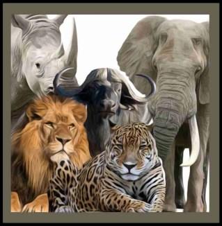 Lion, leopard, cape buffalo, rhino, elephant