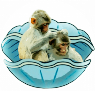 Macaques in clam