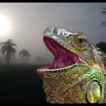 Florida: Bashing the brains out of iguanas as alleged illegal aliens
